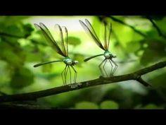 Minuscule - Ladybugs