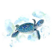 Baby sea turtle watercolor by Brett Blumenthal. The sea life nursery print is a lovely addition for a nautical nursery for baby boy or girl. Sea Turtle Nursery, Sea Life Nursery, Sea Turtle Art, Baby Sea Turtles, Nursery Boy, Sea Turtle Decor, Ocean Nursery, Nursery Decor, Room Decor