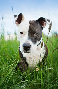 Every dog has their own set of personality traits that make them unique, so you cannot predict a dog's behavior solely on its breed type. There are many m