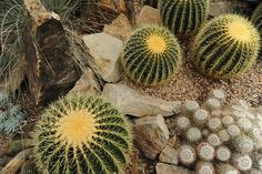 Cactus, stones, sand, Volunteer Park Conservatory, Capitol Hill, Seattle, Washington, USA