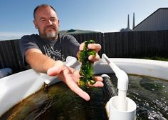 New Horizon - Monterey Bay Seaweeds brings seaweed superpowers to plates.