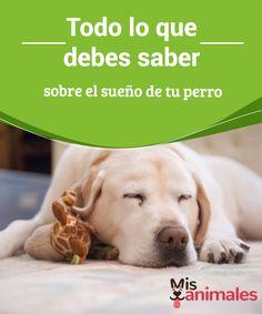 Todo lo que debes saber sobre el #sueño de tu perro  Ver #dormir a nuestro can es una de las cosas que más nos gustan. Saber cómo podemos ayudar a nuestra #mascota a que duerma bien y tenga todo lo #necesario para ello es vital para su descanso y su buena salud.