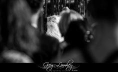 Bride entrance at Cavalli Stud Farm Wedding Venue.  Greg Lumley Photographer.