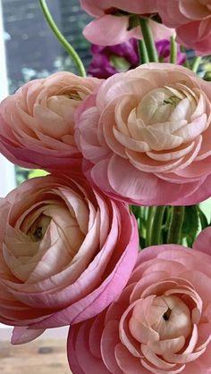Rose Like Flowers, Flowers For Sale, Burgundy Flowers, Cut Flowers, Fresh Flowers, White Flowers, Ranunculus Wedding Bouquet, Ranunculus Flowers, Wedding Flowers