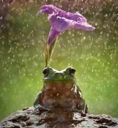 14 uroczych zwierząt, które znalazły sobie naturalne parasolki. Fantastyczne zdjęcia! - Natopie.to