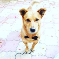 My Dog is ready FOR wedding! #wedding #party #weddingparty #TagsForLikes.com #celebration #bride #groom #bridesmaids #happy #happiness #unforgettable #love #forever #weddingdress #weddinggown #weddingcake #family #smiles #together #ceremony #romance #marriage #weddingday #flowers #celebrate #instawed #instawedding #party #congrats #congratulations