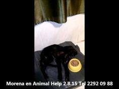 Morena Rescatada en Animal Help en estado de extrema flacura y debilidad