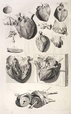 Anatomia Humani Corporis, Centum & Quinque Tabulis - Govard Bidloo, 1685.