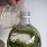 building a bottle ecosystem