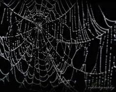 Sparkly Spider Web Dripping With Early Morning Dew By Orphotography On Etsy