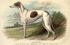 Italian Greyhound Made in U.K Antique style dog key ring collection DOG ARTS JP
