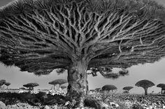 ancient trees. beth moon.