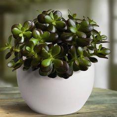 ehrfurchtiges schone zimmerpflanzen die wenig licht brauchen erhebung pic der cddeeeccbefbac
