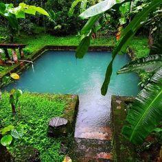 Kerala, Pond, God's own country! Village House Design, Kerala House Design, Village Houses, Natural Swimming Ponds, Natural Pond, Village Photography, Nature Photography, Kerala Houses, Tropical Pool