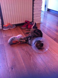 Twee operaties achter de rug met een lampenkap als trofee... Maar met een schoen tussen de poten vergeet hij al zijn pijn en zorgen ;-) - 14 december 2014