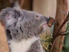 The social media posts from the Australian Reptile Park and Symbio Wildlife Park were judged by Tourism Australia and Qantas to be the best promotion for the country in the past year.