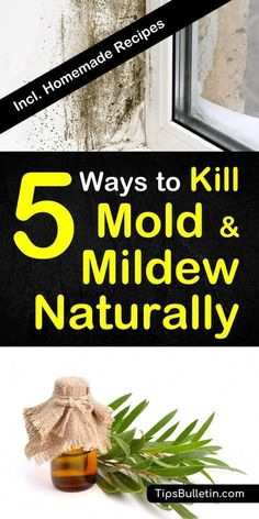 392 Best Carpet Cleaning Diy Tips Images In 2018