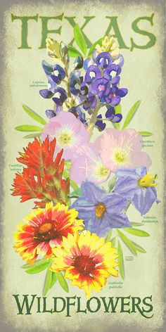Texas Wildflowers by Texas Poster