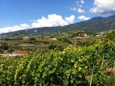 #mathier #wine #valais #switzerland Wine Tasting, Switzerland, Vineyard, Outdoor, Outdoors, Vineyard Vines, The Great Outdoors