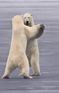 Dancing Bears by Frans Lanting.
