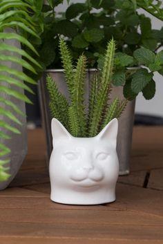 vaso gato ziovara $80