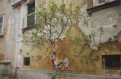 William Eggleston, Untitled (Budidng Tree Against Wall) from the Berlin Series…