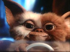 I love the 80's and growing up watching Gremlins was awesome. Gizmo is so cute! - Click image to find more hot Pinterest pins
