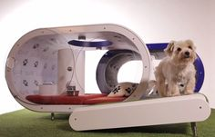 Making its debut at this year's Crufts dog show in Birmingham, England, the Dream Doghouse offers the following indulgences: an AstroTurf treadmill, a hydro-therapy pool, a paw-operated snack dispenser, designer vinyl wallpaper, and of course, a built-in Samsung table