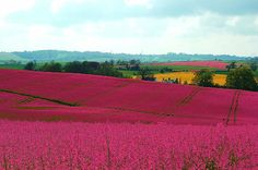 ImageFind images and videos about flowers, england and countryside on We Heart It - the app to get lost in what you love. Beautiful Places In England, Places Ive Been, Places To Go, Living In England, British Countryside, Nature Table, My Dream, Natural Beauty, Country Bumpkin