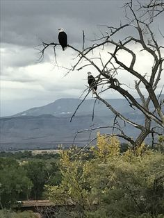 Majestic Bald Eagles enjoying the view in Grand Junction,CO Bald Eagles, New England, Places Ive Been, Colorado, Wildlife, Sweet, Travel, Animals, Candy