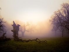 Ohlone Wilderness Trail by dattho, via Flickr