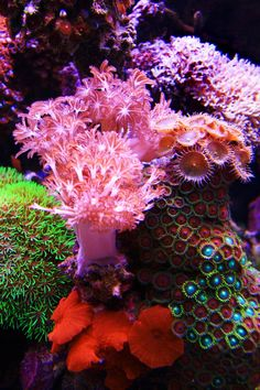 Dominated Softies tank from Thailand - Reef Central Online Community