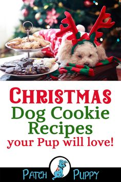 9 scrumptious dog Christmas cookie recipes - including dog cookies with icing, sugar cookies for dogs, dog cookies with pumpkin and peanut butter + 6 more! Best Picture For Dogs art For Your Taste You Dog Christmas Cookie Recipe, Christmas Dog, Homemade Christmas, Christmas Cookies, Christmas Desserts, Christmas Treats, Dog Cookie Recipes, Dog Biscuit Recipes, Dog Treat Recipes