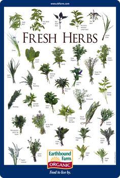 Fresh Herbs ID Chart