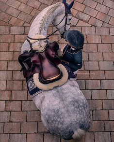 The most important role of equestrian clothing is for security Although horses can be trained they can be unforeseeable when provoked. Riders are susceptible while riding and handling horses, espec… Pretty Horses, Horse Love, Horse Girl, Beautiful Horses, Equestrian Outfits, Equestrian Style, Equestrian Fashion, Horse Fashion, Fashion Kids