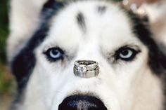 Any chance you can get Paws to do this during engagement photos?!?