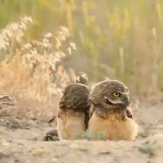 Things that make you go AWW! Like puppies, bunnies, babies, and so on. A place for really cute pictures and videos! Cute Funny Animals, Funny Cute, Funny Owls, Animals And Pets, Baby Animals, Odd Animals, Baby Owls, Vogel Gif, Best Funny Pictures