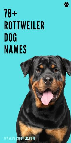 Rottweiler dog names - great names for your puppy like Weeny, Draco, Blake, Wags, Boomer, Willow, Queenie, NItro, Punky, Zeek, Spike... #RottweilerDogNames #DogNames