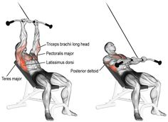 Target your latissimus dorsi with the incline straight-arm pull-down! Your pecs, posterior delts, triceps, and various back muscles act as synergists. Cable Workout, Gym Workout Tips, Workout Fitness, Good Back Workouts, Back Exercises, Chest Exercises, Best Chest Workout, Chest Workouts, Fitness Tips
