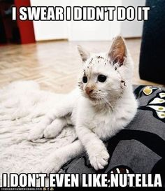 OMG that's me when my mom says where did u hide the Nutella? I always say I didn't do it XD