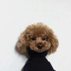 puppy poodle in turtleneck Cute Puppies, Cute Dogs, Dogs And Puppies, Doggies, Animals And Pets, Baby Animals, Cute Animals, Dog Love, Puppy Love