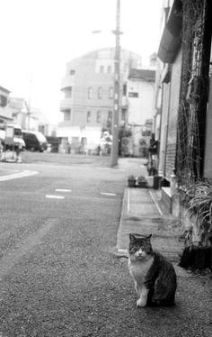 レンジファインダーカメラ - 夕飯前 -  毎月22日は猫の日  猫  モノクロ  東飯能フォトショップで現像  - Camera Talk -