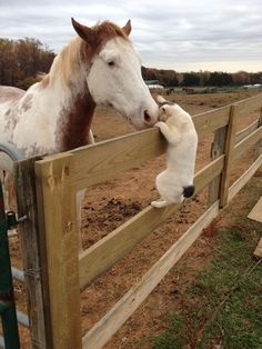 Barn Cat Visits Horse, Immediately Regrets Decision