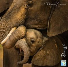 💖🐘💖🐘 adorable creatures. .!! @africanamazing - The Africanamazing Team is honoured to present this stunning photo of baby elephant and…