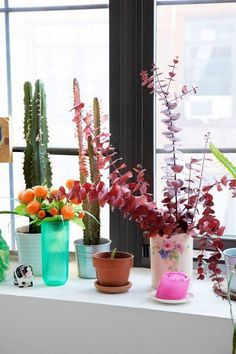 Halle Berry's Thriving Houseplant Is Actually Super Easy to Care For Effektive Bilder, die wir über Halle Berry, Window Ledge Decor, Window Ideas, Bunny Ear Cactus, Girls Apartment, Apartment Living, Apartment Ideas, New York Homes, Thing 1