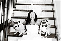 #pugs #bowties #Dogs in wedding  Photo by Bray Danielle Photography