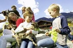 Kids petting and caring for animals - wonderful birthday event, mobile petting zoos and pony rides - Orange County areas rentals  Petting zoo animal rental - Irvine, Riverside, LA, Orange County, Santa Ana, and surrounding areas! Newport Beach, Anaheim - children's zoo