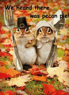 Thanksgiving squirrels