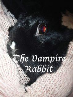 CHANY the VAMPIRE RABBIT! www.tifforabbit.com