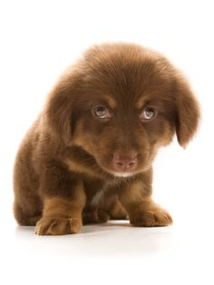 Sad Little Puppy - Dog Pictures
